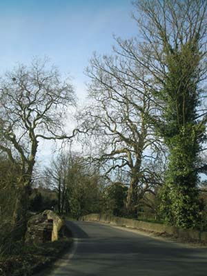 Driving through the Meon Valley WEB